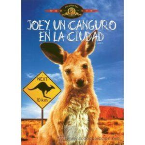 JOEY, UN CANGURO EN LA CIUDAD